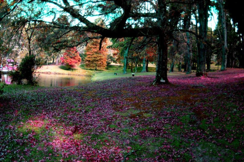 horto_florestal