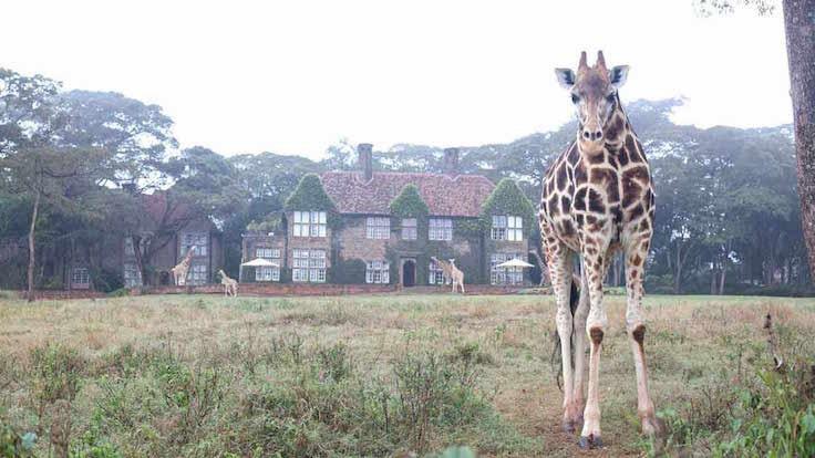 Giraffe Manor1